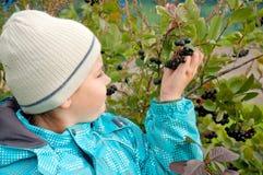 有Aronia小树枝的男孩  免版税库存照片