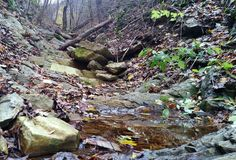 有clearwater的美好的秋天森林森林春天 自然 免版税库存图片