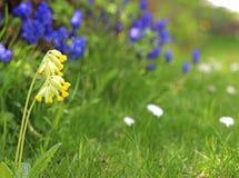 有cowslip的庭院在前景 免版税库存照片