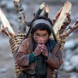 有firewoods篮子的,尼泊尔西藏男孩 库存照片