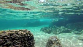 有GoPro英雄5黑色的, 4k水下的英尺长度 股票录像