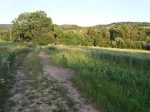 有greengrass的肮脏的路 免版税库存照片