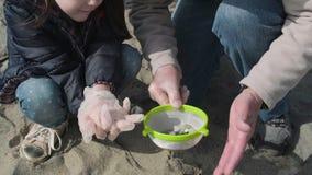 有microplastics的滤锅在海滩 股票录像