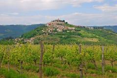 有Motovun小山镇的葡萄园 免版税库存照片