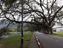 有raintrees的一条风景路在湖附近 免版税库存图片