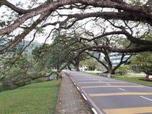 有raintrees行的一条风景路在湖附近的 免版税库存照片