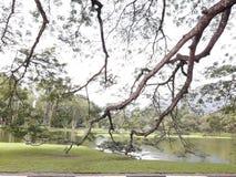 有raintrees行的一条风景路在湖附近的 库存图片