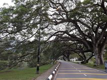 有raintrees行的一条风景路在湖附近的 图库摄影