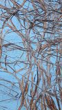 有rootwood踪影的墙壁  免版税库存照片