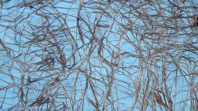 有rootwood踪影的墙壁  免版税图库摄影