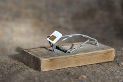有sim卡片的诱饵的捕鼠器 免版税库存图片