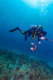 有speargun和死的鱼的轻潜水员 图库摄影