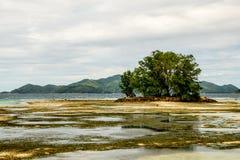 有threes的在一个珊瑚礁海滩, Anse来源人工岛 库存照片