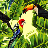 有toucan鹦鹉香蕉叶子的密林 免版税库存图片