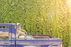 有van car后面的大庭院常春藤纹理墙壁和太阳透镜飘动 免版税库存图片