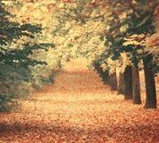 有walkiing的道路的美丽的梦想的秋天森林 免版税库存照片