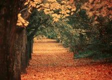 有walkiing的道路的美丽的梦想的秋天森林 库存照片