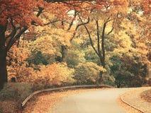 有walkiing的道路的美丽的梦想的秋天森林 免版税库存图片