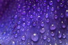 有waterdrops的宏观射击花叶子 库存照片