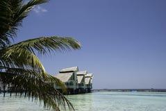 有Waterhuts和Palmtree的Maldivian盐水湖 库存照片