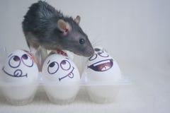 朋友另外概念 奇怪的友谊 鼠是黑的 免版税图库摄影