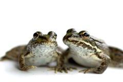 朋友青蛙 库存照片