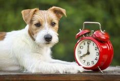 服从的宠物训练-聪明的愉快的小狗 免版税库存照片