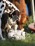 服从的小狗 免版税库存图片