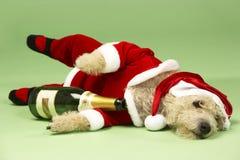 服装狗圣诞老人 库存照片