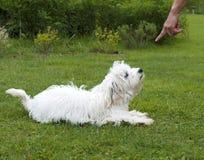 服从的狗 图库摄影