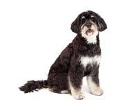 服从的长卷毛狗混合品种狗开会 图库摄影