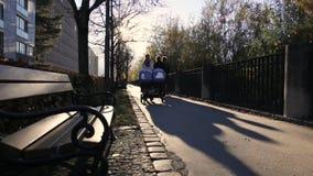 晴朗下午沥青秋天五颜六色的非常好的叶子的路 股票视频