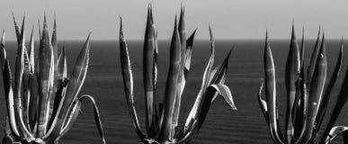 晴朗日地中海岩石海运海景天空的夏天 免版税库存图片