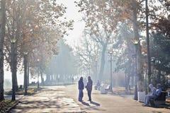 晴朗日的公园 免版税库存照片