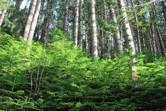 晴朗日的森林 免版税库存图片