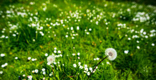 晴朗日绿色的草甸 免版税库存照片