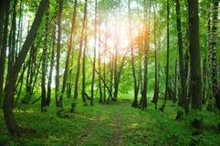 晴朗森林的夏天 库存图片
