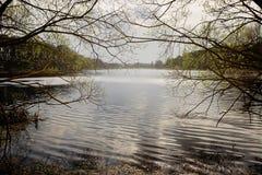晴朗横向的春天 河在一个绿色森林里 图库摄影