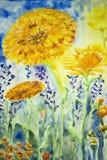 晴朗的万寿菊 五颜六色的水彩绘画 免版税库存图片