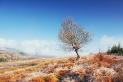 晴朗的下午的桦树森林,当秋天季节时 10月mou 库存照片