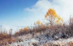 晴朗的下午的桦树森林,当秋天季节时 10月mou 免版税图库摄影