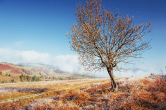 晴朗的下午的桦树森林,当秋天季节时 10月mou 免版税库存照片