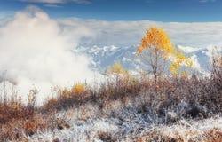 晴朗的下午的桦树森林,当秋天季节时 10月mou 图库摄影