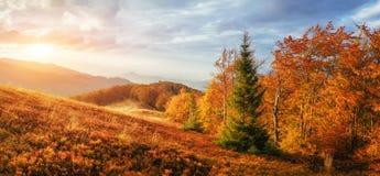 晴朗的下午的桦树森林,当秋天季节时 库存照片