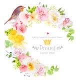 晴朗的与知更鸟鸟的春天传染媒介设计圆的框架 免版税库存照片