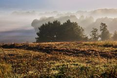 晴朗的光芒偷看了在树梢在初夏早晨 免版税库存图片