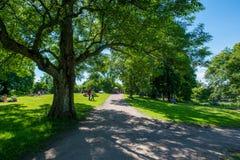 晴朗的公园 库存照片