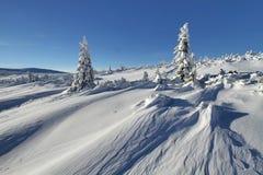 晴朗的冬天 库存照片
