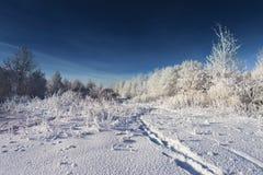 晴朗的冬天 免版税库存图片