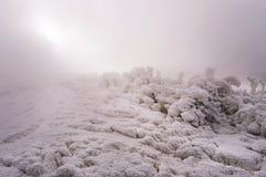 晴朗的冷的冬日在白俄罗斯 免版税库存图片
